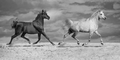Horse Dancers #IG 5169