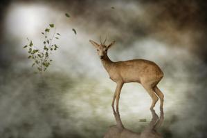 Young Deer #IG 8369